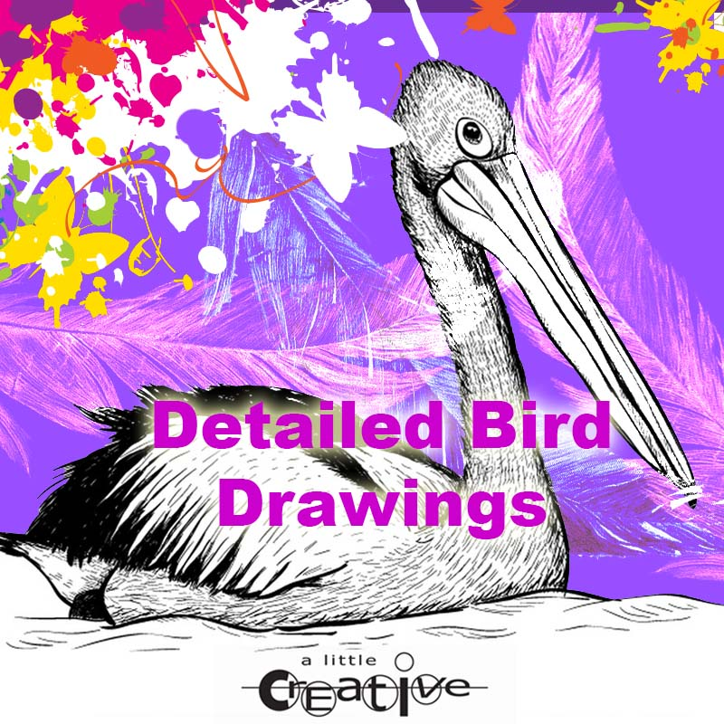 Sunshine Coast art class detailed bird drawings